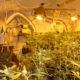 Kriminalisté zajistili anabolika, kokain, extázi a marihuanu